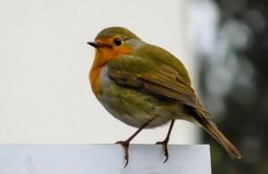 bird-1099639_640